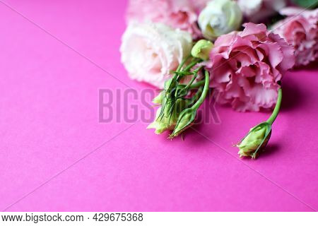 Beautiful Pink Eustoma Flowers (lisianthus) In Full Bloom With Buds Leaves. Bouquet Of Flowers On Fu