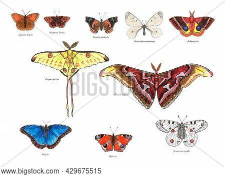 Butterflies With Their Latin Names. Apollo, Atlas Moth, The Duke Of Burgundy, Cloud Apollo, Large Co