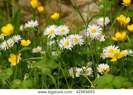 Spring's flowers