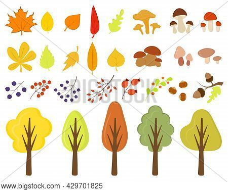 Autumn Trees, Leaves, Mushrooms, Berries Isolated On A White Background. Collection Of Autumn Elemen