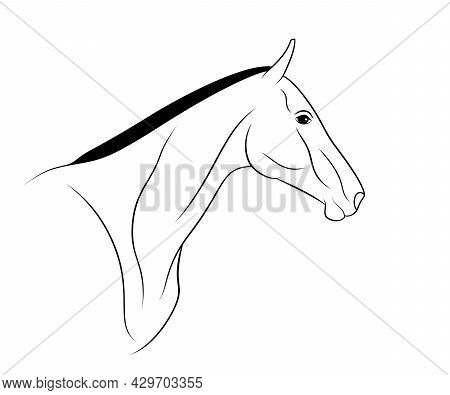Akhal-teke Horse Portrait Is On A White Background.