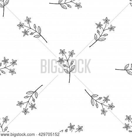 Centaury, Seamless B-w Dd Ww Herb Isol