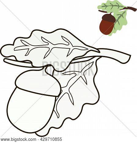 Gland Sur Une Branche Avec Des Feuilles De Coloriage Avec Croquis, Dessin Vectoriel