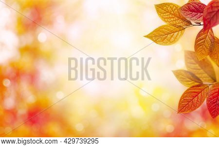 Red And Orange Autumn Leaves Over Blurred Nature Background. Fall Background.