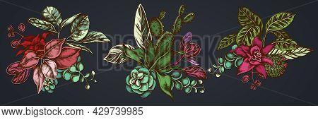 Flower Bouquet Of Colored Ficus, Iresine, Kalanchoe, Calathea, Guzmania Cactus Stock Illustration