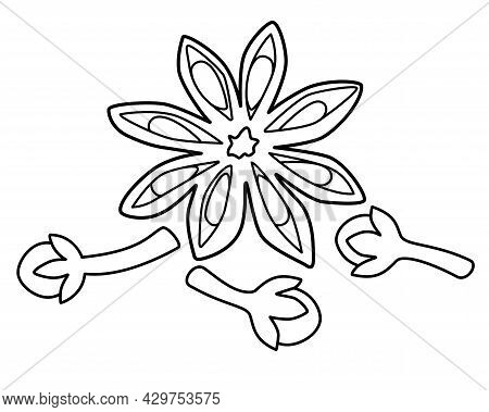 Star Anise And Cloves - Spices Vector Linear Illustration For Coloring Coloring Or Logo. Outline. Sp