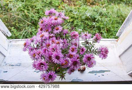 Aster Bessarabicus Decorative Ornamental Plant. Bouquet Of Autumn Flowers. Beautiful Purple Asters I