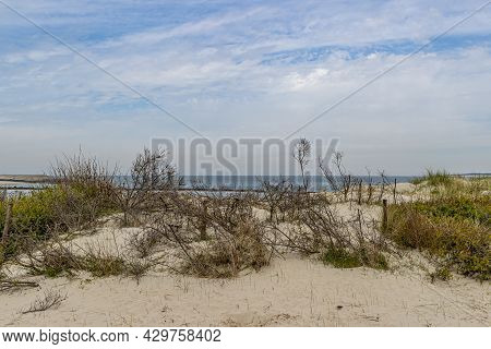 Coastal Sand Dunes With Wild Plants With The Sea In The Background. Rhine-meuse-scheldt Delta, Sunny