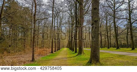 Rural Path, Hiking Trails Between Huge Bare Trees, Green Grass And Brown Dry Leaves, Cloudy Spring D