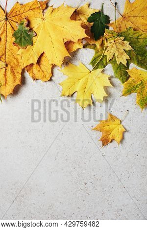 Yellow Autumn Maple Leaves On A Light Gray Stone Background. Autumn Background.