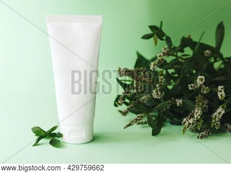 Cosmetic Lotion, Cream Tube, Bottle Package With Green Natural Leaf Of Mint . High Quality Photo
