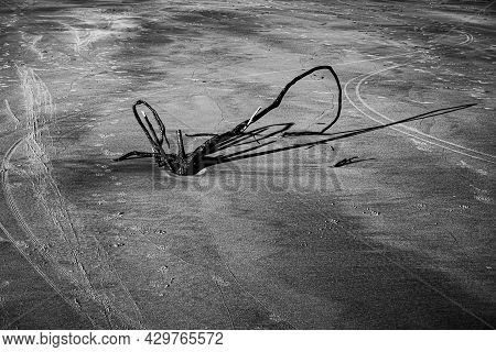 Abstract Black And White Background Of An Exposed Tree Root On An Island Beach As The Evening Sun Ca