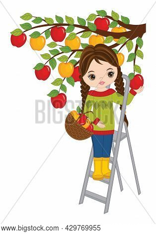 Vector Beautiful, Young Girl Picking Apples From The Tree. Brunette Girl With Pigtails Wearing Jeans