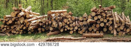 Freshly Cut Pine Trunks Stacked Up On Top Of Each Other In A Pile On Meadow Against Green Forest, Pa