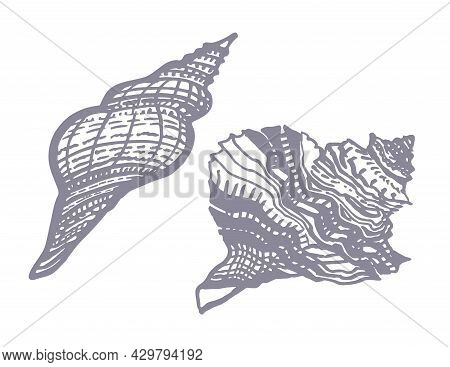 Set Of Monochrome Ornamental Hand Drawn Seashell Of Freehand Ink Style Isolated On White. Amazing In