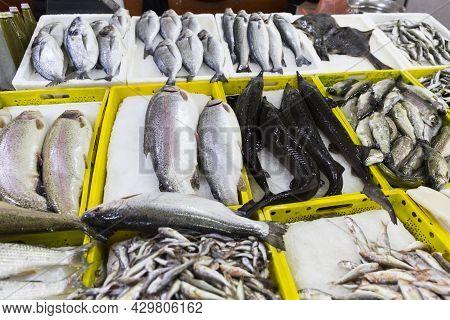 Fresh Seafood Market In Batumi Georgia. Live Fish In Ice. Flounder, Red Mullet, Salmon, Catfish, Eel