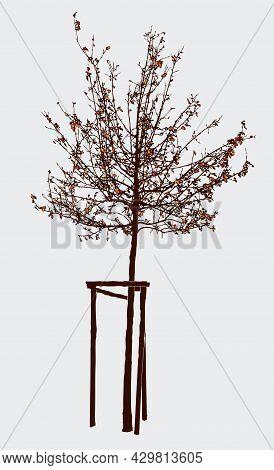 Illustration Of Silhouette Tree Sapling In Autumn Park