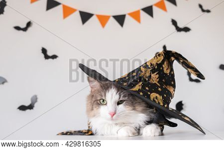 An Adorable Gray Cat Sits In A Halloween Witch Costume On The Background Of Bats. Halloween Pets