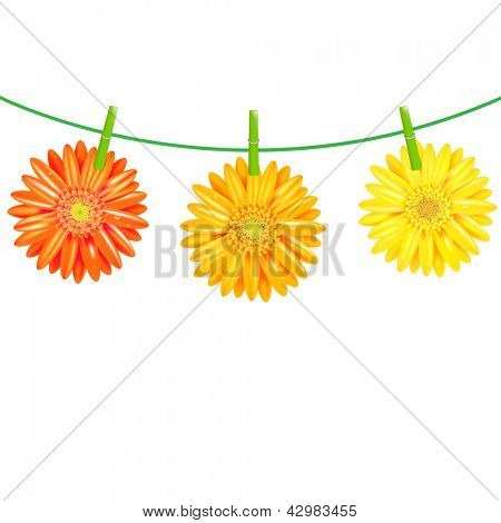 3 Gerbers Flowers With Clothespegs, Isolated On White Background, Vector Illustration