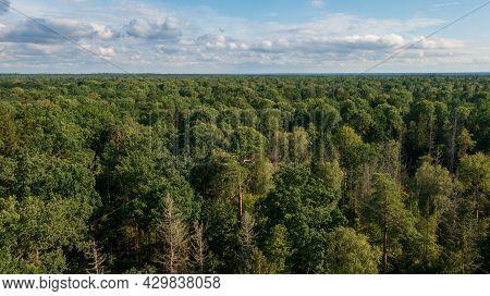 Polish Part Of Bialowieza Forest To East From Hajnowka Aerial View, Podlaskie Voivodeship, Poland, E