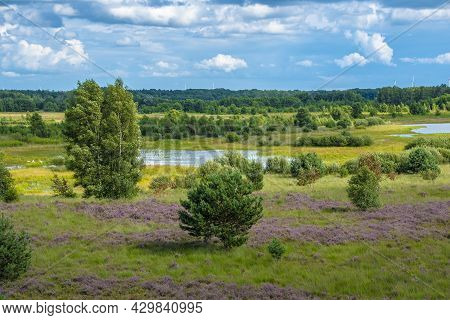 Beautiful Dutch Landscape With Little Lakes In The Summer. Maasduinen - A Picturesque Place In Noord