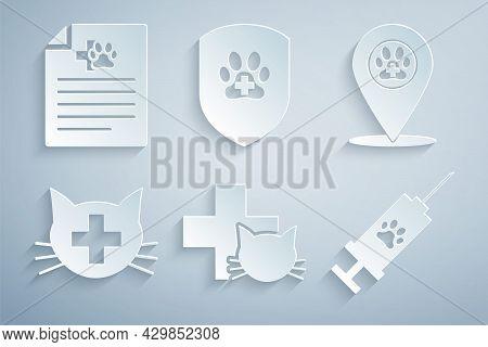 Set Veterinary Clinic, Location Veterinary, , Syringe With Pet Vaccine, Animal Health Insurance And