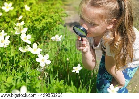 Little Girl With A Magnifying Glass In Her Hand Investigate  Details Of Nature . Summer Time Outdoor