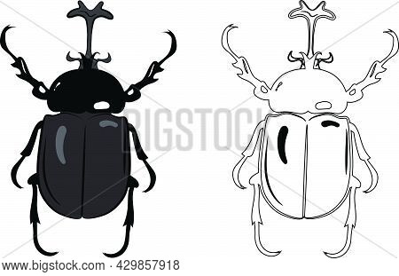 Realistic Top View Of Rhino Scarab Or Stag Beetle. Isolated On White Background. Insects Bugs Worms