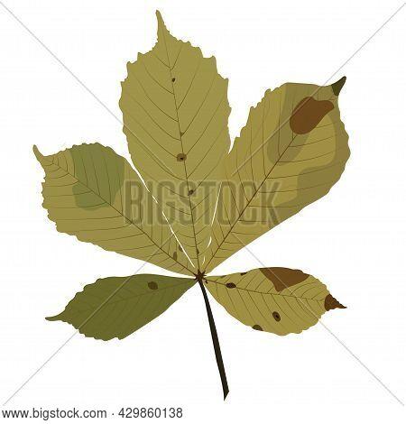 Fallen Chestnut Leaf. Autumn. Vector Stock Illustration Isolated On White Background.
