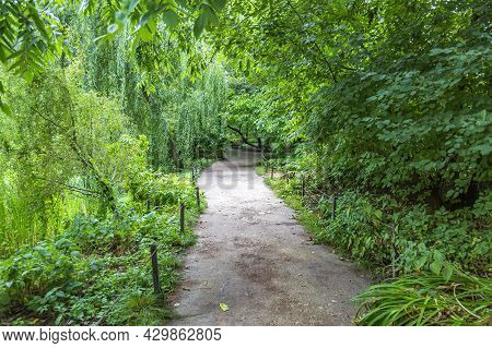 Path For Pedestrians In The Green Summer Park