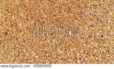 Beach Horizontal Background: Wet Golden Broken Shell Rock On The Beach Close Up