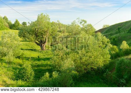 Summer Landscape With A Green Ravine With Trees And A Blue Sky
