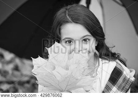 Fall Colors. Happy Girl Cover Face With Autumn Leaves. Beauty Look. Umbrella For Walking In Wind And