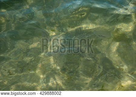 Translucent Silhouettes Of Aurelia Aurita Jellyfish Among Water Ripples In The Black Sea. Gray Turqu