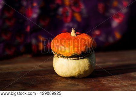 Close-up Turban Squash, Cucurbit. Turkish Pumpkin With A Turban. An Interesting Type Of Pumpkin. Har