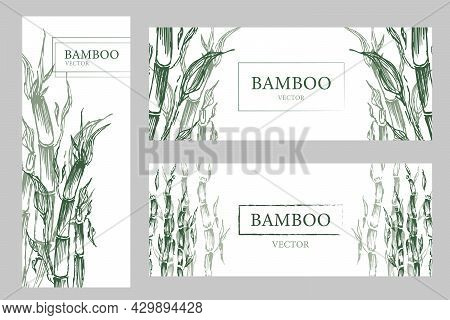 Natural Tropical Plant Background. Set Three Banners With Green Bamboo Trees. Vector Illustration Tr