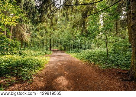 Beautiful Landscape Of Summer Mixed Forest, Park. Path Lane Walkway Way For Walking In Woods Trees.