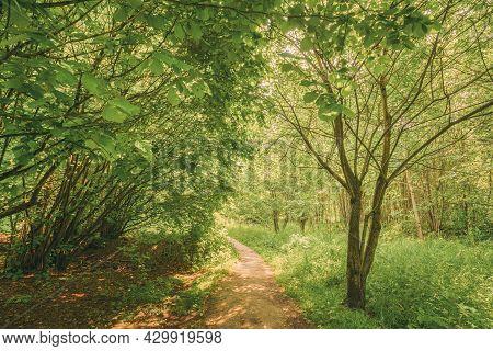Beautiful Path Lane Walkway Way In Summer Forest Park. Healthy Walking In Park Between Woods, Trees