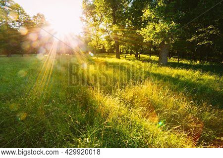 Sunset Or Sunrise In Forest Landscape. Sun Sunshine With Natural Sunlight And Sun Rays Through Woods