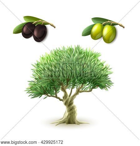 Olive Oil Production Traditional Primary Products Pictograms Set Of Green And Black Olives Abstract