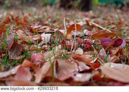 Autumn Leaves On Grass. Beautiful Sunny Day In Garden With Fallen Leaves On Lawn, Selective Focus An