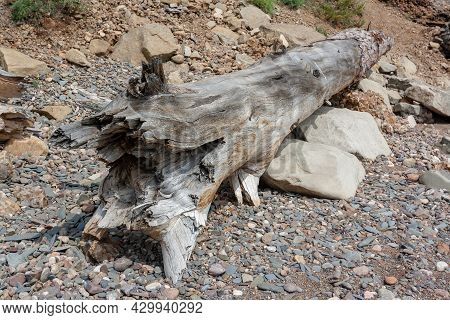 Large Dry Old Tree Trunk With Broken Edge Lies On Pebbles And Large Stones. Horizontal Image.