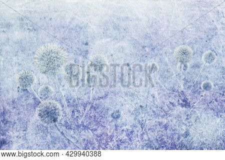 Bush Of Rounded Thorny Flowers Growing In The Steppe, Digitally Processed And Blue Tinted. Horizonta