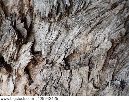 Close Up Of Deeply Textured Grey And Brown Tree Bark