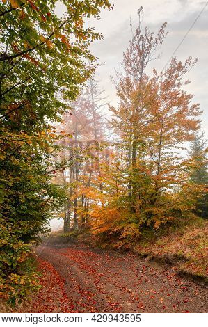 Country Road Through Autumn Forest. Beech Trees In Colorful Foliage. Beautiful Nature Scenery On A F