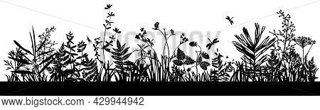 Background With Black Silhouettes Of Meadow Wild Herbs And Flowers. Wildflowers. Wild Grass. Set Of
