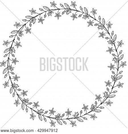 Centaury Frame Border Dd Ww Herb Isol