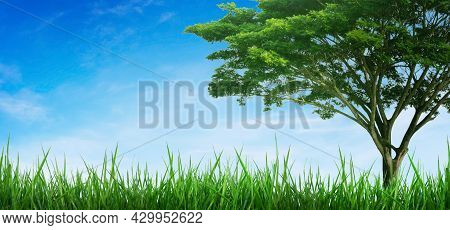 Green Natural View Of Green Grass With Tree And Blue Sky In Background.