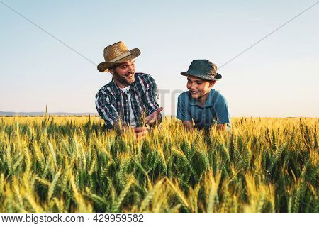 Father And Son Are Standing In Their Growing Wheat Field. Father Is Teaching His Successor About Agr