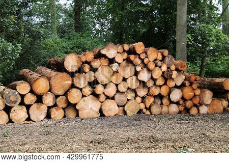 A Wood Pile Stack Of Freshly Sawn Forestry Logs.
